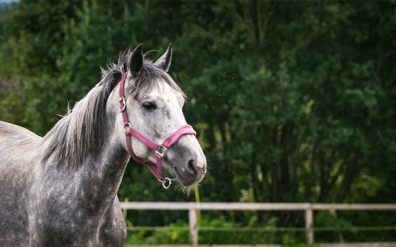 Pferdezucht Cluny