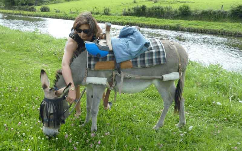 Wandern mit Esel im Burgund